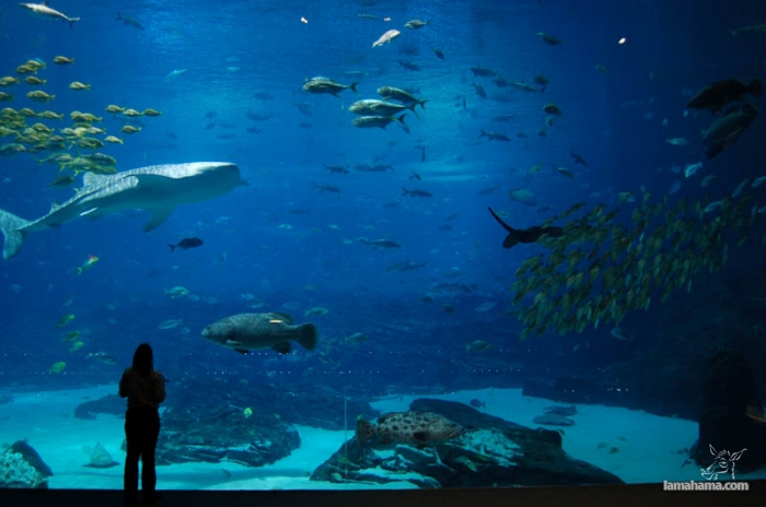 Largest Aquarium In The World