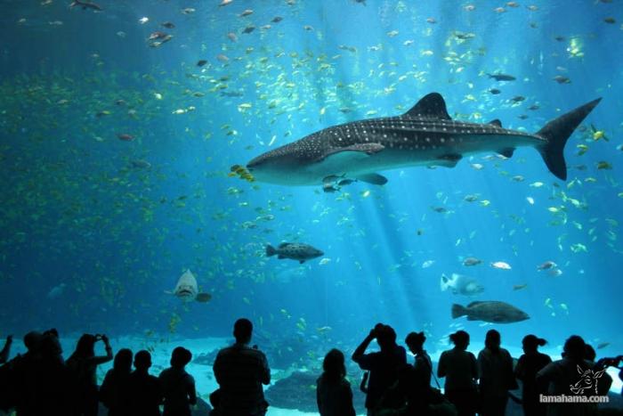 Największe na świecie akwarium - Zdjecie nr 1