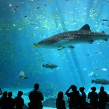 Largest aquarium in the world - Pictures nr 168