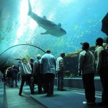 Największe na świecie akwarium - Zdjecie nr 2