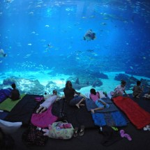 Largest aquarium in the world - Pictures nr 3