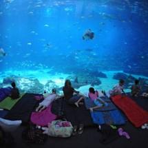 Największe na świecie akwarium - Zdjecie nr 3
