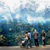 Largest aquarium in the world - Pictures nr 5