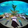 Największe na świecie akwarium - Zdjecie nr 9