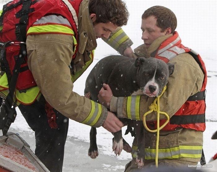 Uratowane zwierzaki - Zdjecie nr 1