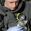 Animals being rescued - Pictures nr 13