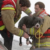Animals being rescued