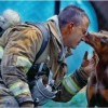 Animals being rescued - Pictures nr 3