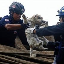 Uratowane zwierzaki - Zdjecie nr 4