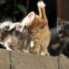 Little kitties - Pictures nr 10