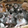Little kitties - Pictures nr 11