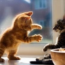 Małe kociaki - Zdjecie nr 17
