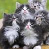 Małe kociaki - Zdjecie nr 2