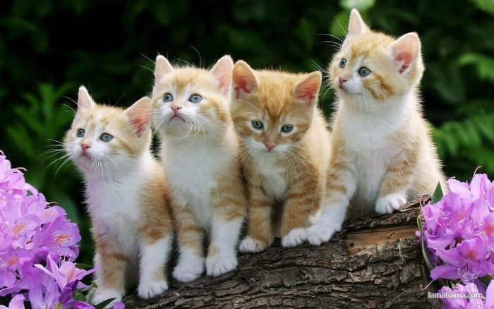 Małe kociaki - Zdjecie nr 3