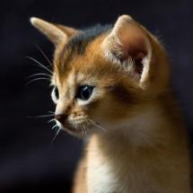 Małe kociaki - Zdjecie nr 37