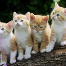 Little kitties - Pictures nr 29