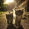 Małe kociaki - Zdjecie nr 4