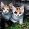 Little kitties - Pictures nr 6