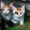 Małe kociaki - Zdjecie nr 6