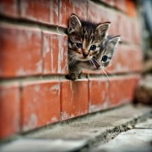 Małe kociaki - Zdjecie nr 7