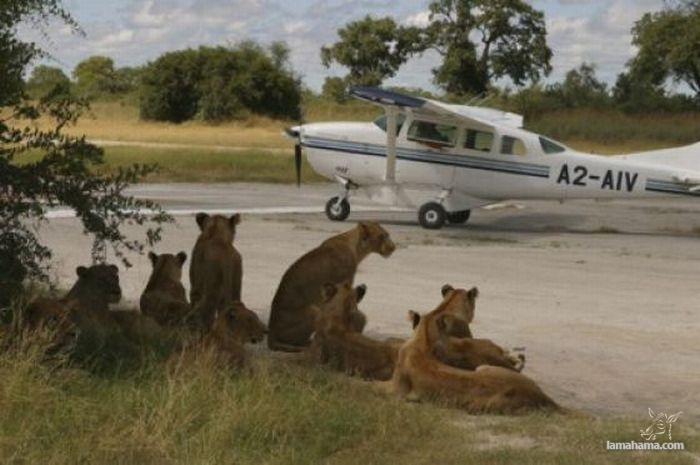 Only in Africa - Pictures nr 10