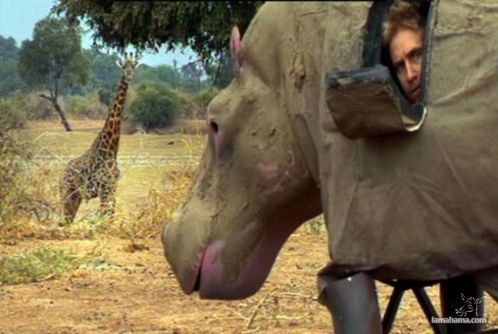 Only in Africa - Pictures nr 11