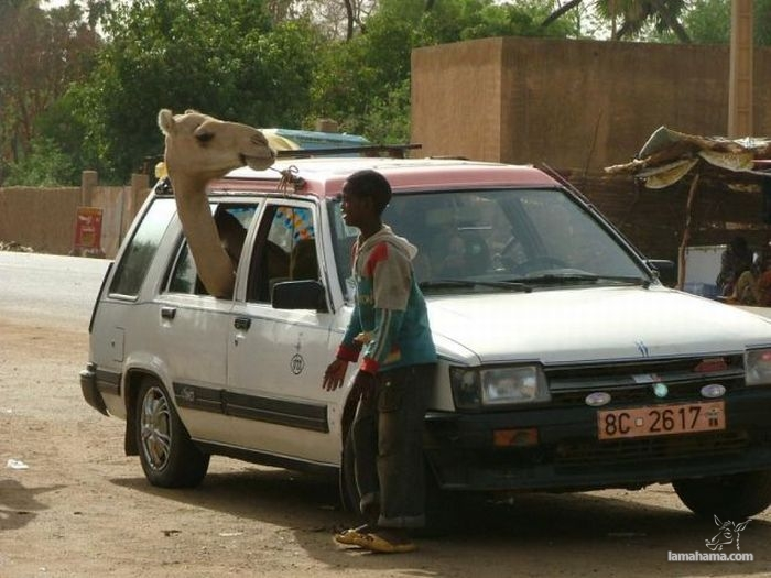 Only in Africa - Pictures nr 13