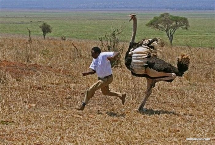 Only in Africa - Pictures nr 14