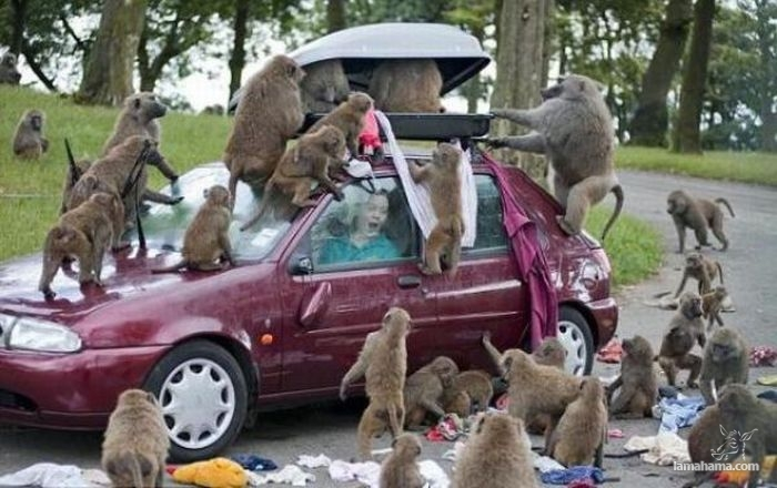 Only in Africa - Pictures nr 15