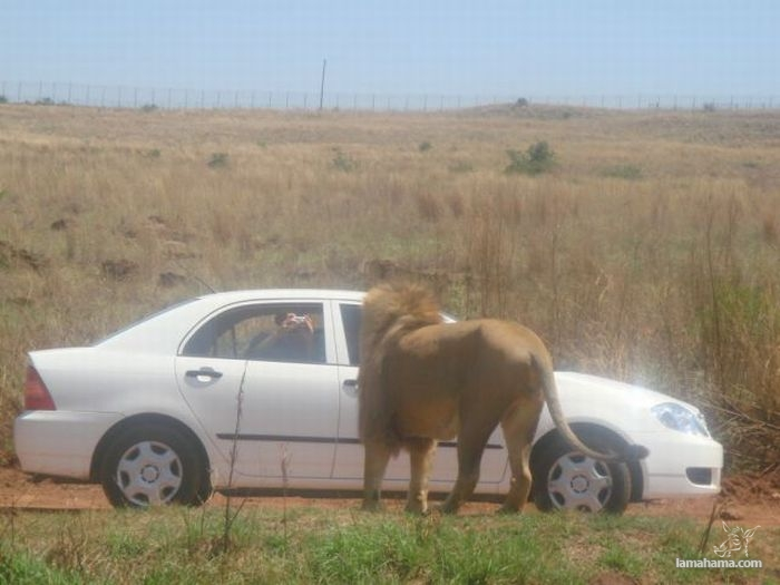 Only in Africa - Pictures nr 18
