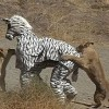 Only in Africa - Pictures nr 19