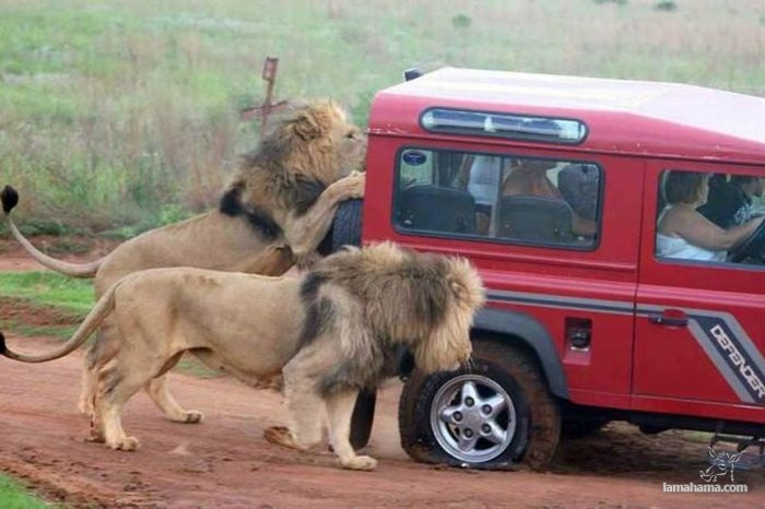 Only in Africa - Pictures nr 3