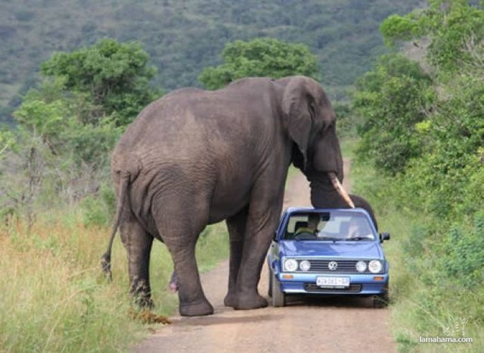 Only in Africa - Pictures nr 34