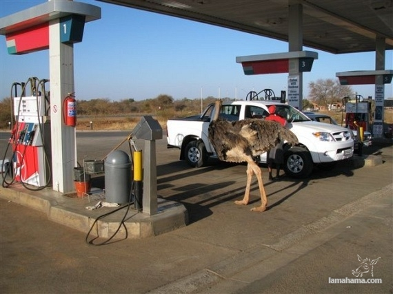 Only in Africa - Pictures nr 38