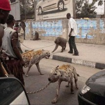 Only in Africa - Pictures nr 4