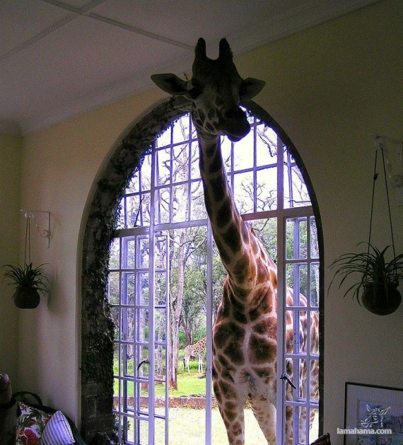 Only in Africa - Pictures nr 52