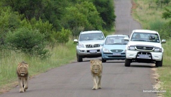 Only in Africa - Pictures nr 56