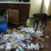 Dogs in trouble - Pictures nr 10