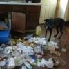 Rozrabiające psy - Zdjecie nr 10