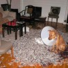 Dogs in trouble - Pictures nr 12