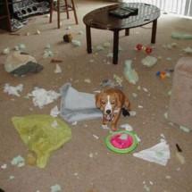 Rozrabiające psy - Zdjecie nr 2
