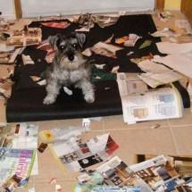 Rozrabiające psy - Zdjecie nr 4