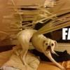 Rozrabiające psy - Zdjecie nr 7