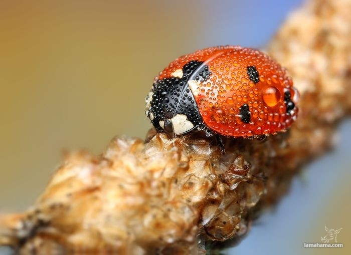 Amazing pictures of insects in drops of dew - Pictures nr 1