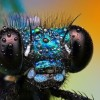 Amazing pictures of insects in drops of dew - Pictures nr 12