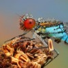 Amazing pictures of insects in drops of dew - Pictures nr 6