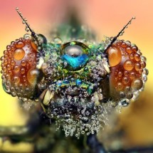 Amazing pictures of insects in drops of dew - Pictures nr 478