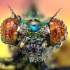 Amazing pictures of insects in drops of dew - Pictures nr 7