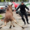 Funny situations involving the cops - Pictures nr 3