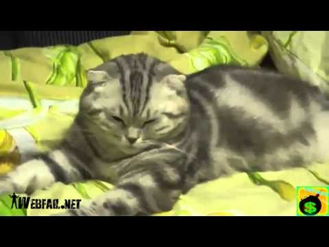 Fail Compilation - March 2012